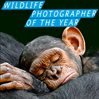 54th Wildlife Photographer Of The Year Competition