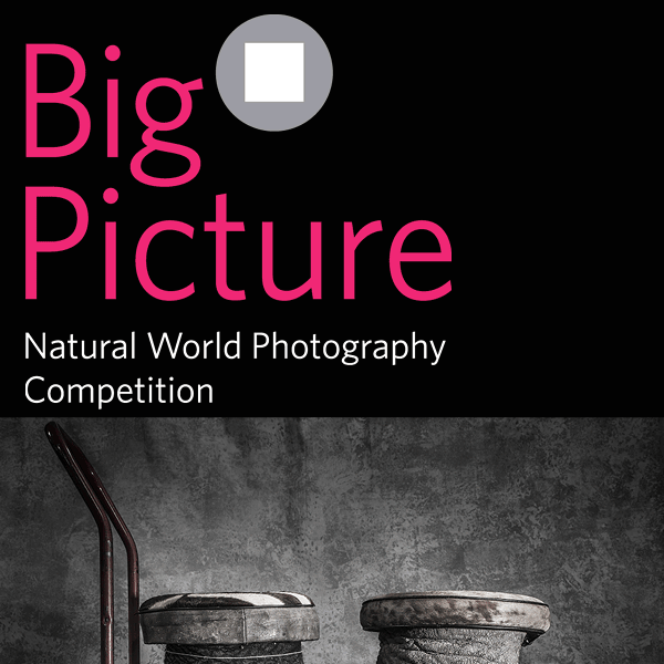 BigPicture Natural World Photography Competition 2018