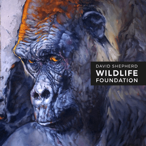 Wildlife Artist Of The Year Competition 2020
