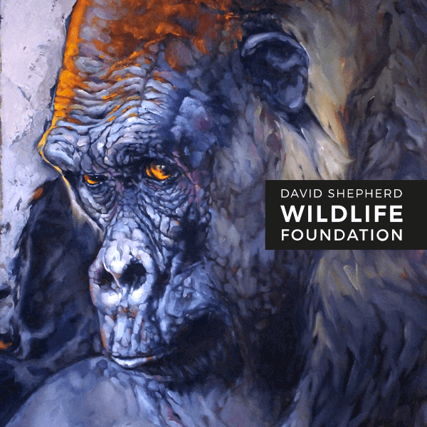 Wildlife Artist Of The Year Competition 2021