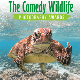 The Comedy Wildlife Photography Awards 2021 | Graphic Competitions